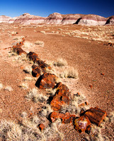Long Logs Area, Petrified Forest National Park